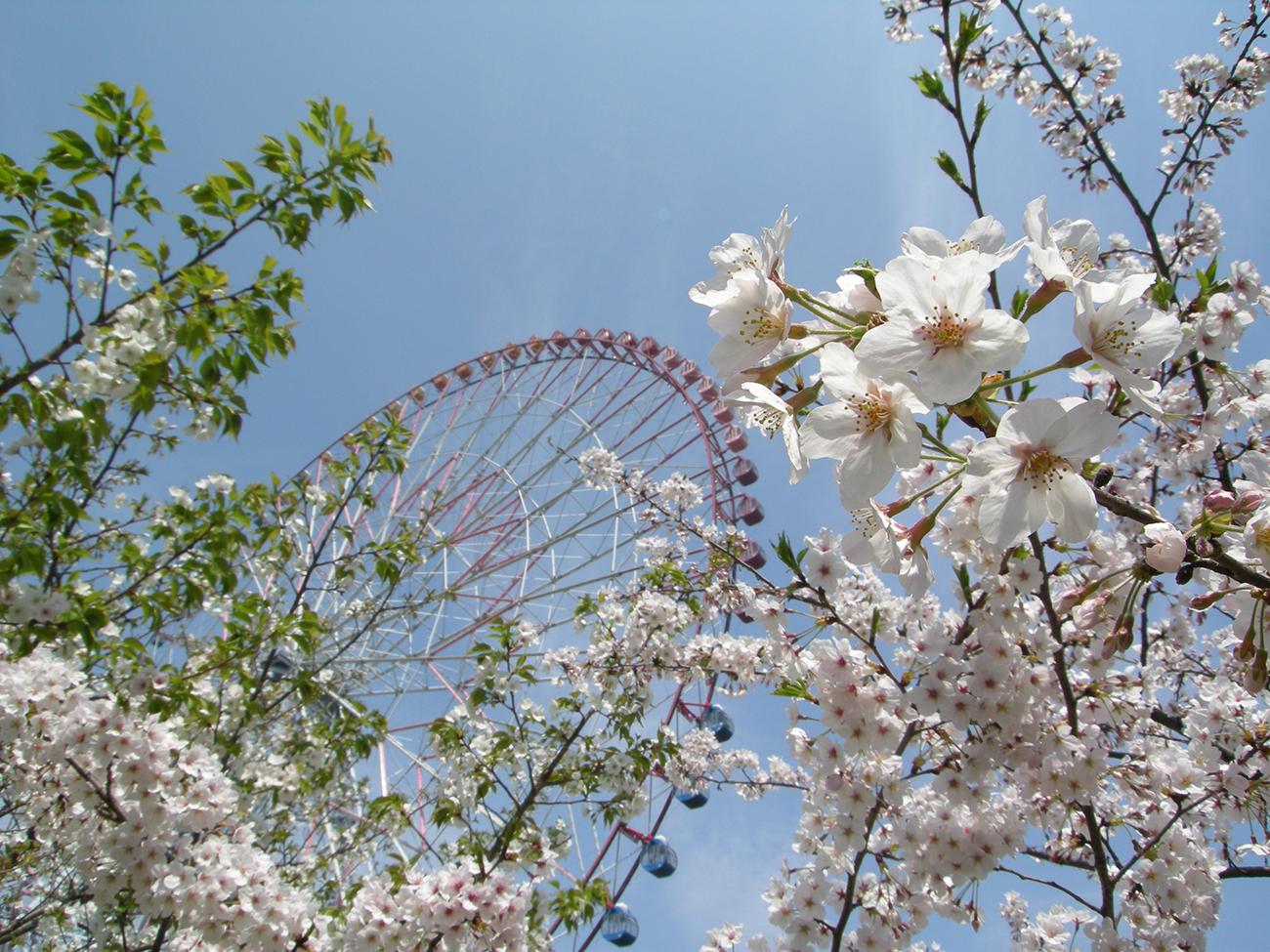 画像 葛西臨海公園 観覧車と桜