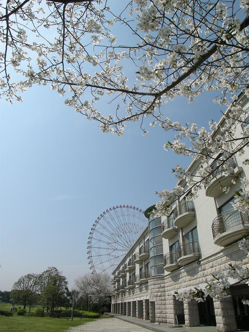画像 ホテルシーサイド江戸川と桜