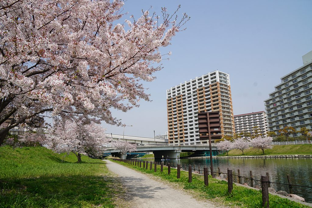 画像 旧中川の風景
