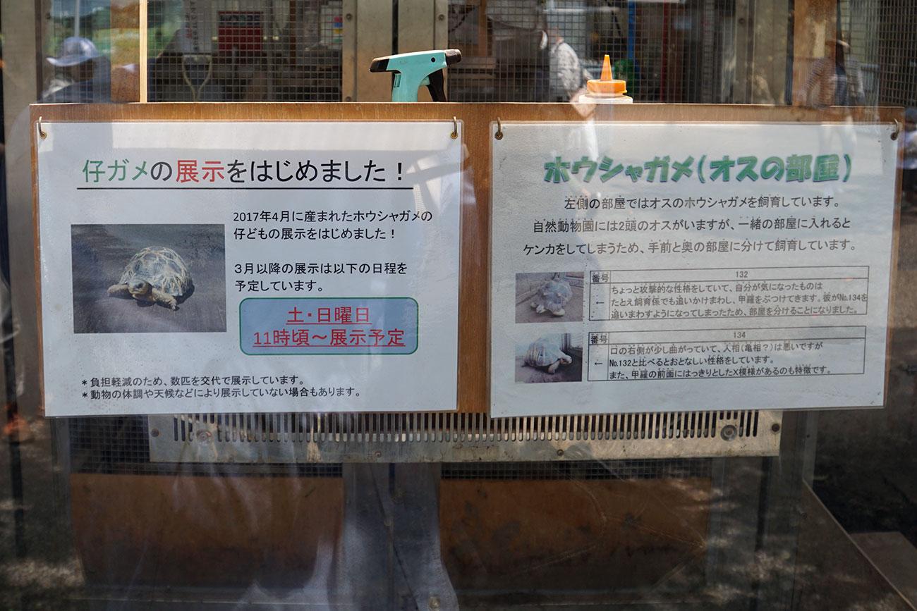 画像 ホウシャガメの展示解説