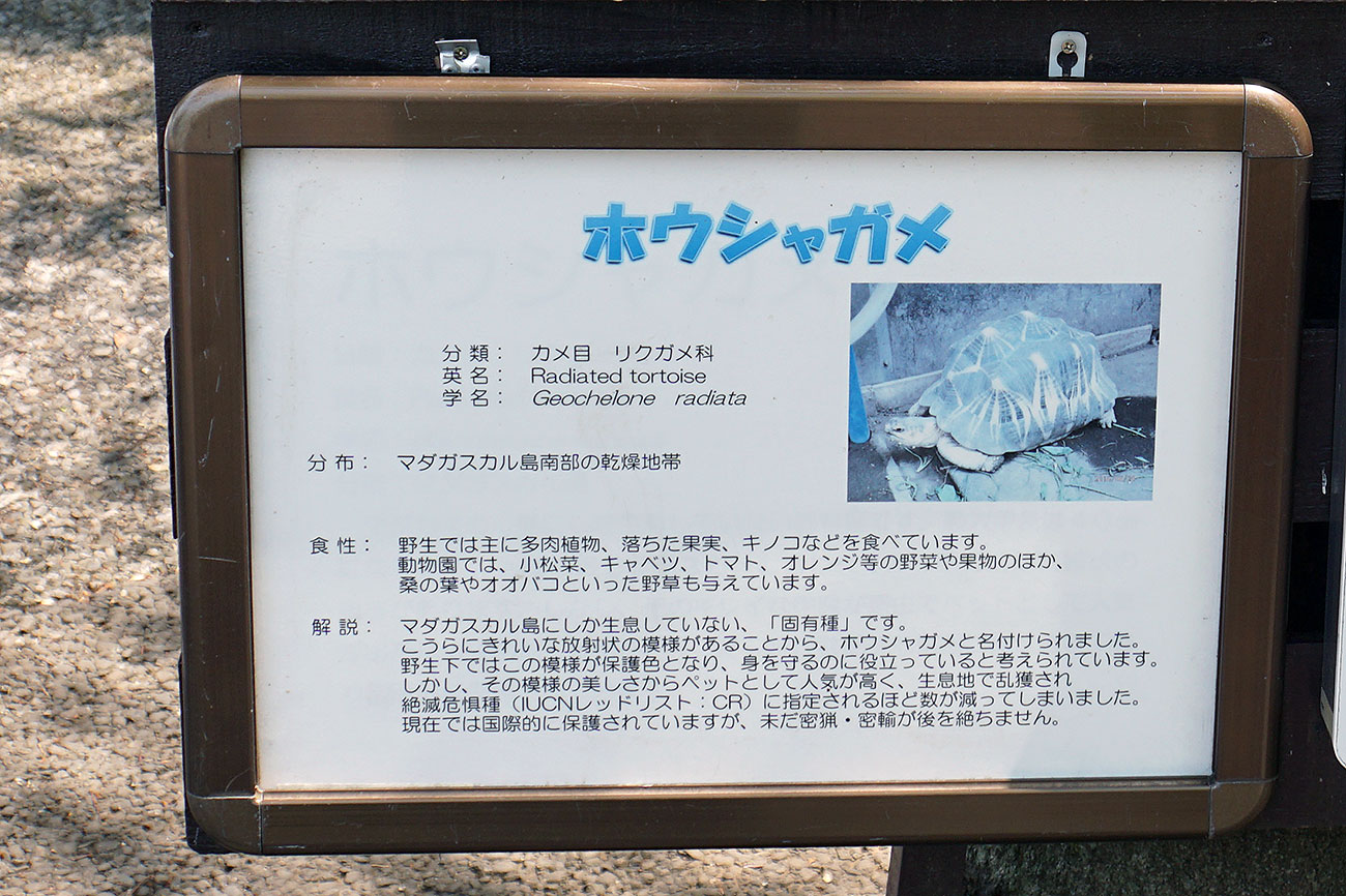 画像 ホウシャガメの紹介板