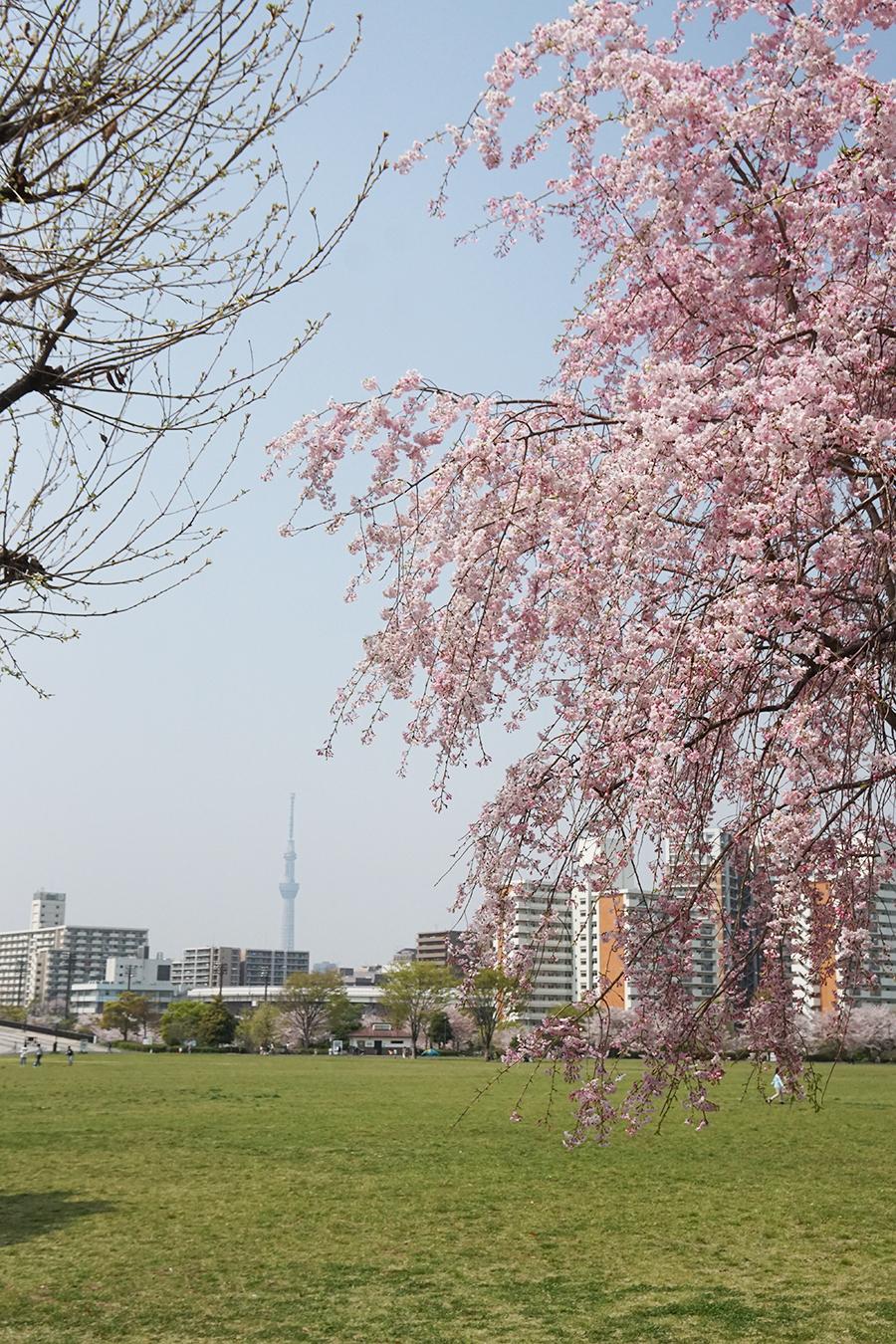 画像 大島小松川公園