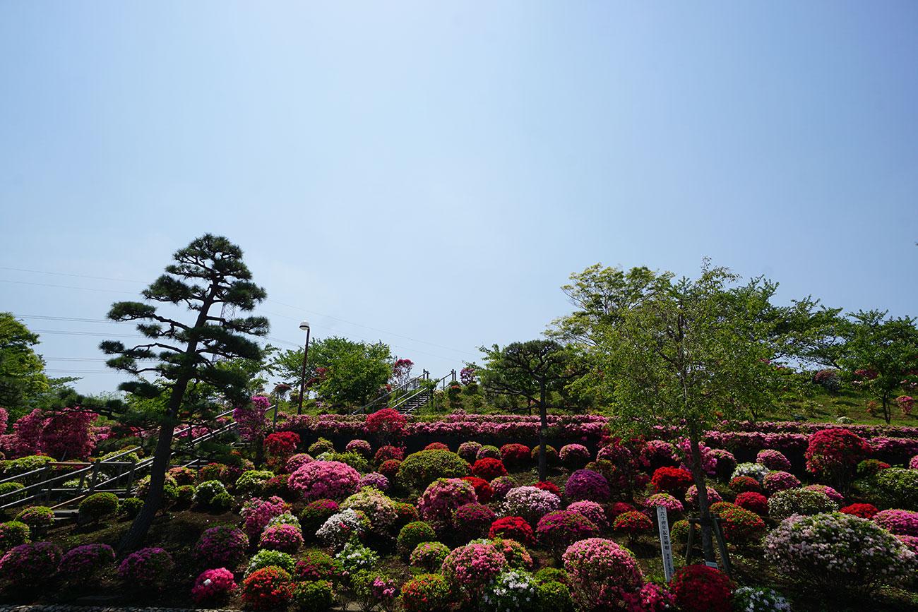 画像 ツツジ山の風景 2018年4月20日