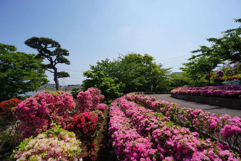 画像 江戸川区のツツジの名所 なぎさ公園 展望の丘