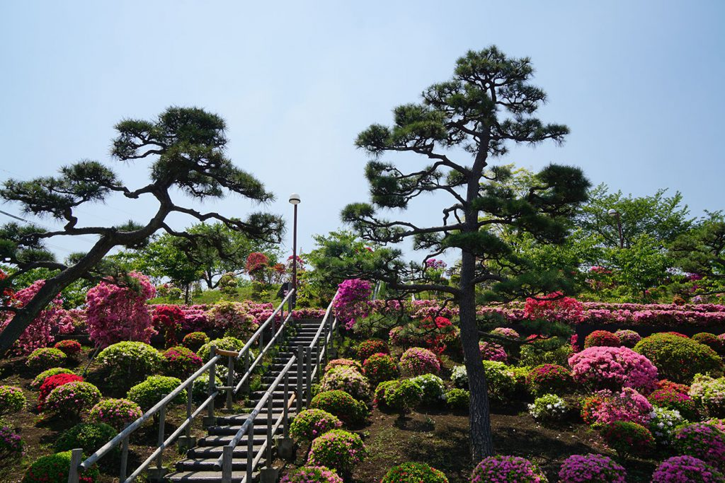 画像 江戸川区の名所<ツツジ山>