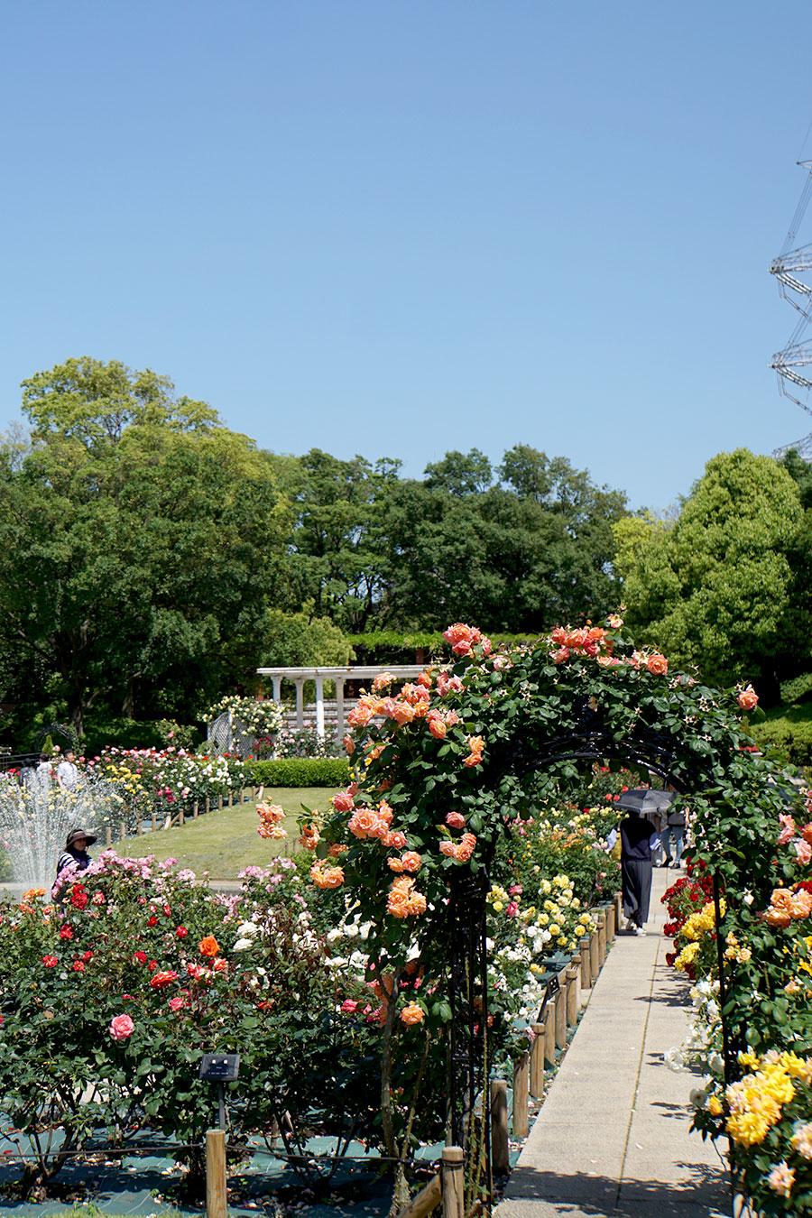 画像 フラワーガーデンのバラ