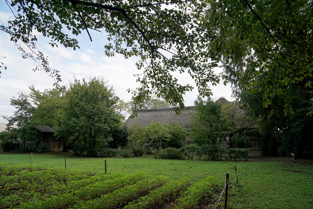 画像 一之江名主屋敷 北側の畑地跡