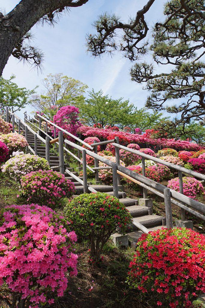 画像 展望の丘ののぼる階段