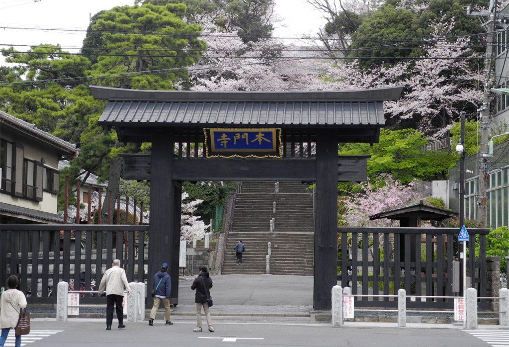 画像 桜の散り始めの池上本門寺