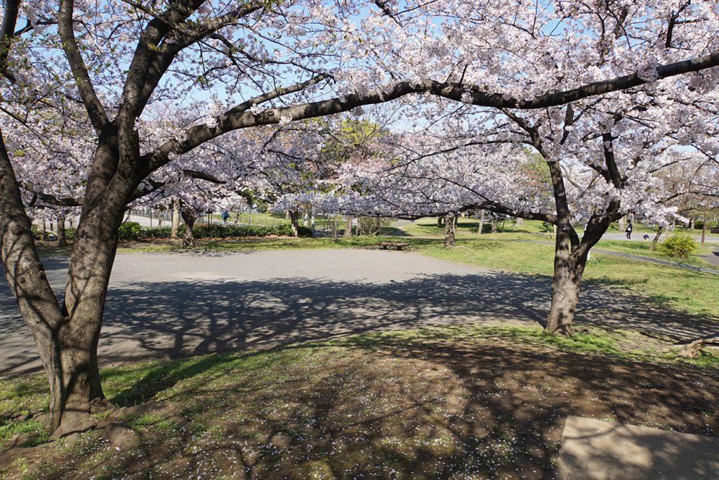 画像 篠崎公園