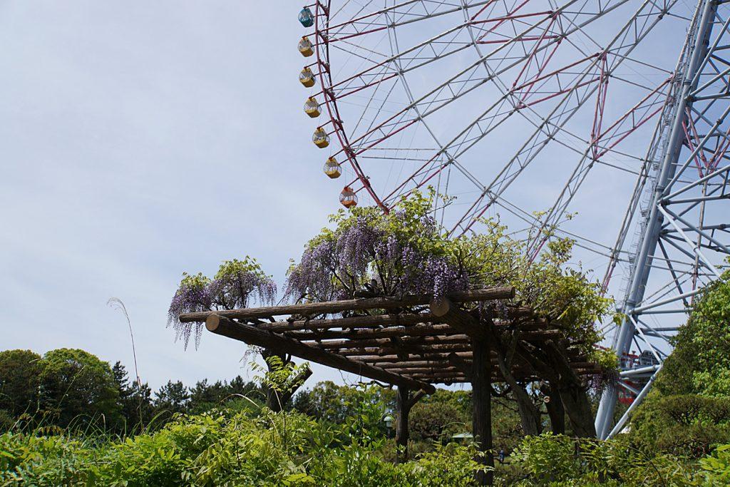画像 葛西臨海公園の藤棚