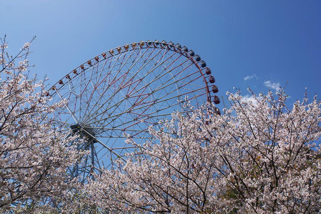 画像 葛西臨海公園 桜と観覧車