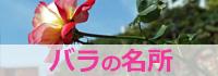 江戸川区内のバラの名所