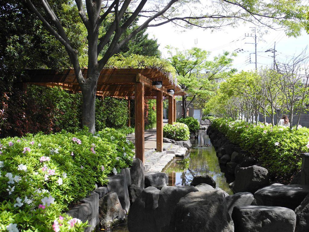 画像 一之江境川親水公園の藤棚