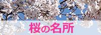 江戸川区の桜の名所