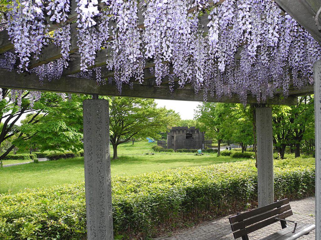 画像 風の広場の藤棚 奥に見えるのは旧小松川閘門