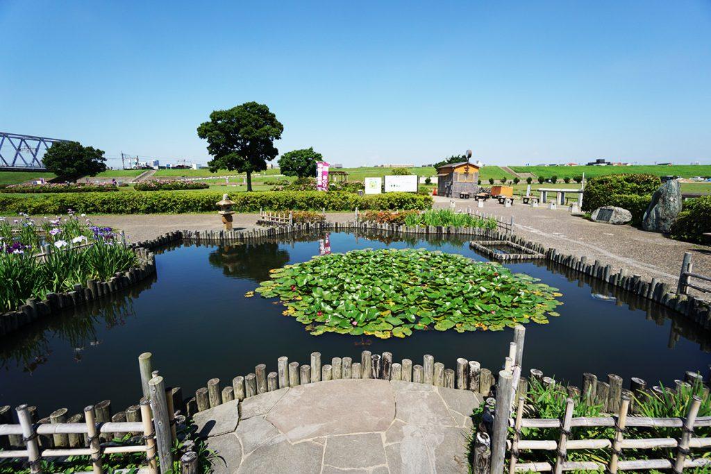 画像 スイレンの池