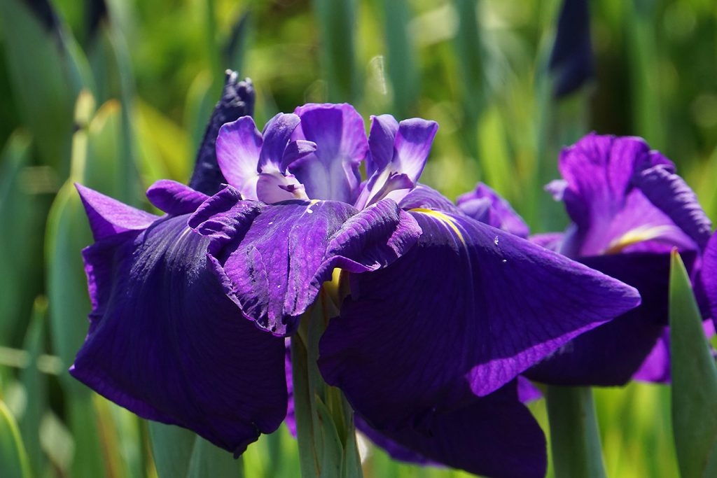 画像 紫鳳殿(肥後)