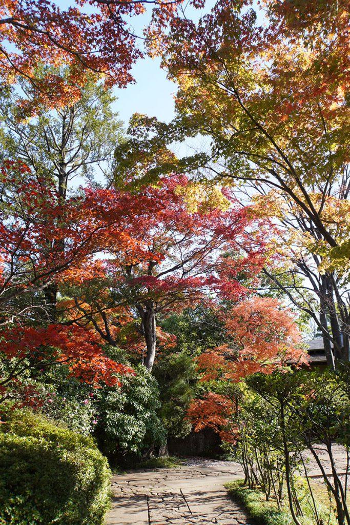 画像 源心庵の入口付近の紅葉