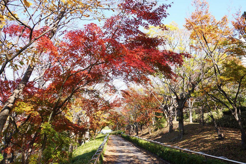 画像 大島・小松川公園のスロープ