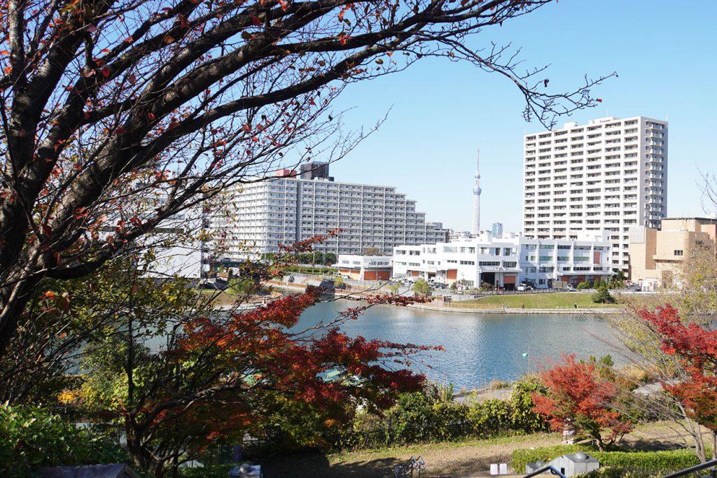 画像 大島・小松川公園からスカイツリー方面をのぞむ