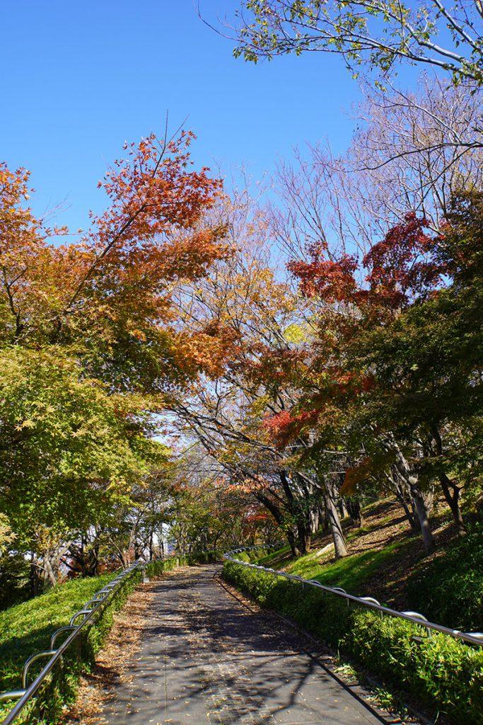 画像 大島・小松川公園の南側スロープ