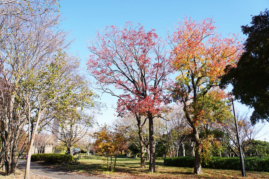 画像 大島・小松川公園内の紅葉