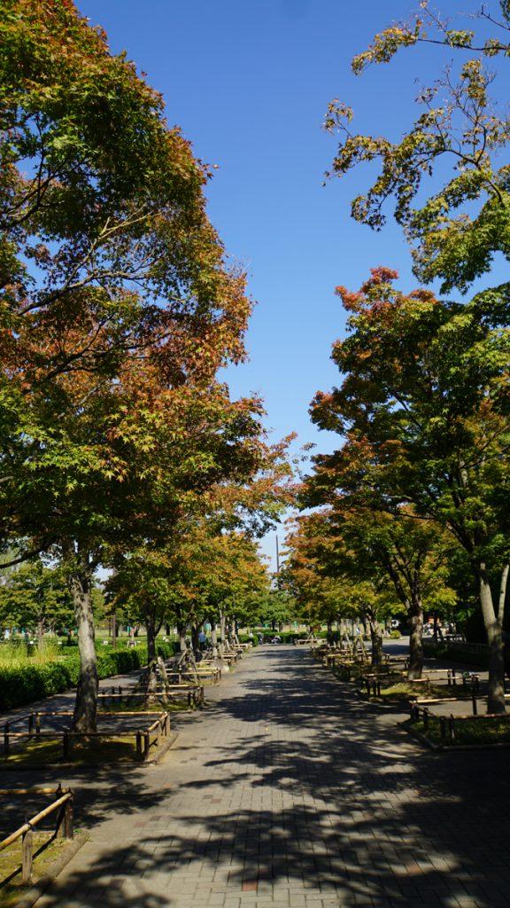 画像 行船公園の紅葉