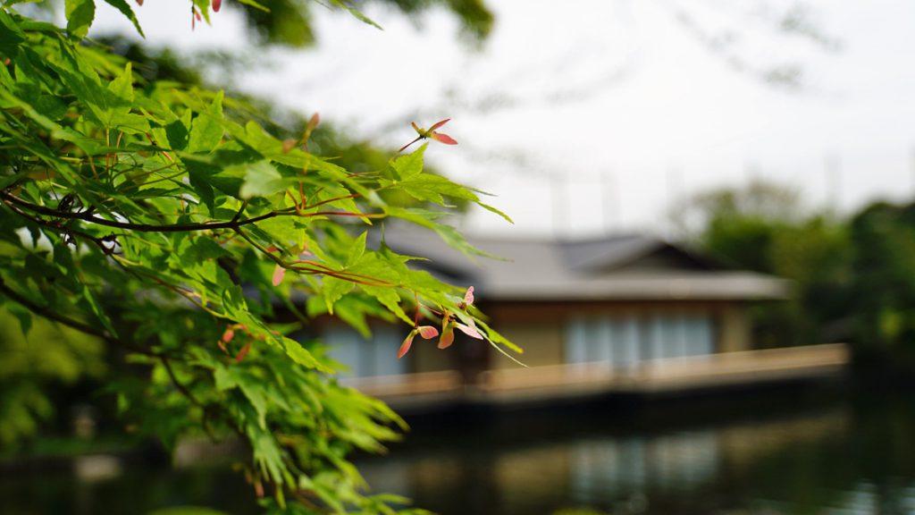画像 平成庭園の初夏の風景