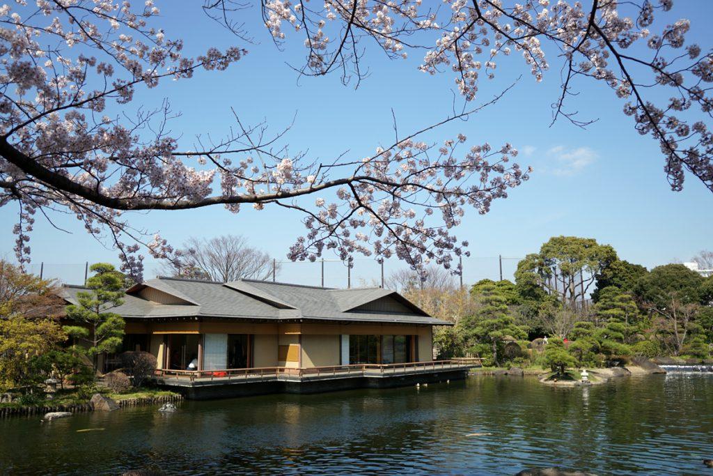 画像 平成庭園のソメイヨシノ